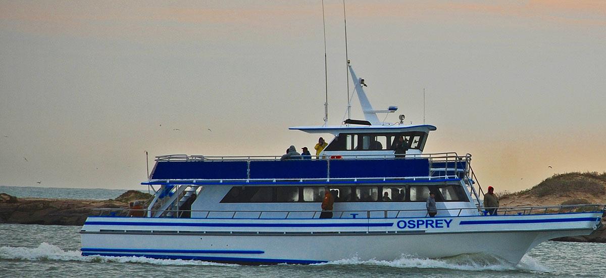 Osprey Luxury Sightseeing Tours